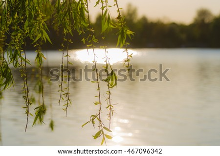 bright sun on lake in summer