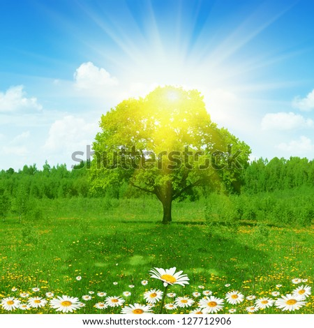 Bright sun shining through foliage of tree. - stock photo
