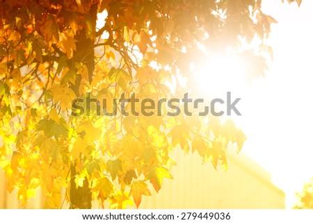 Bright sunburst through a green leafy tree  - stock photo