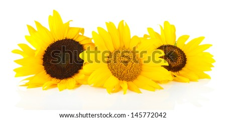 Bright sunflowers isolated on white - stock photo