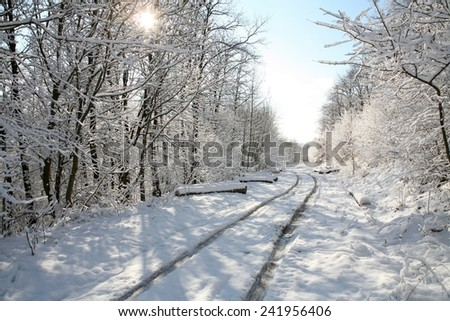 Bright sunny forest in the snow  - stock photo