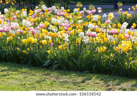 Bright sunny spring flowerbed: tulips and narcissuses - stock photo