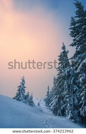 Bright sunrise in a Carpathian mountain valley covered with fresh snow. Wonderful morning light. Ukraine Europe