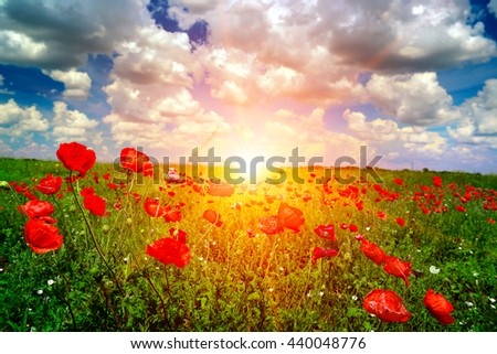 Bright sunrise in the poppy field and blue sky - stock photo