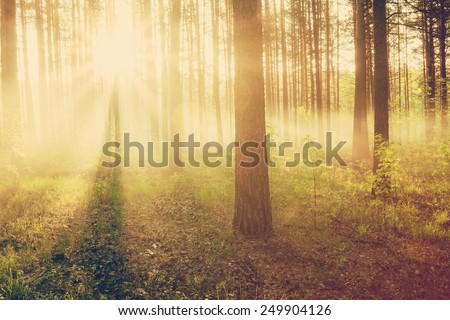 bright sunset in the woods, retro film filtered, instagram style  - stock photo