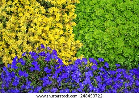 Bright texture of colorful flowers - stock photo