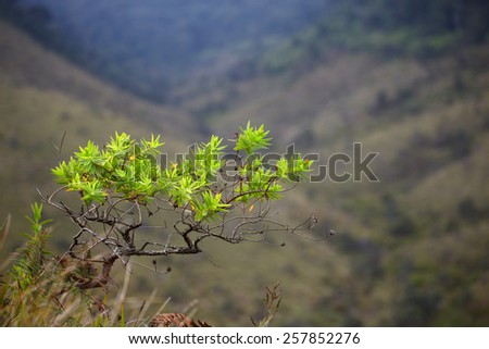 Bright tree leaves on a background of blurred mountain landscape