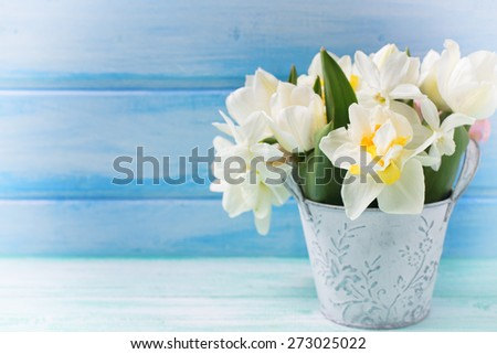 Bright white daffodils and tulips  flowers in bucket in ray of light  on turquoise  painted wooden planks against blue wall. Selective focus. Place for text.  - stock photo