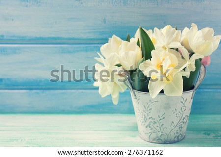 Bright white daffodils and tulips  flowers in bucket on turquoise  painted wooden planks against blue wall. Selective focus. Place for text. Toned image.  - stock photo