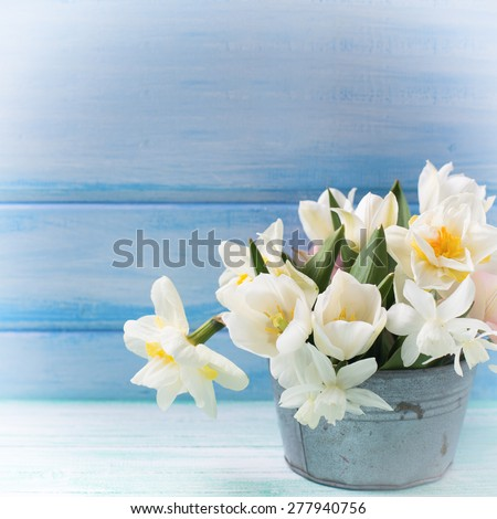 Bright white daffodils and tulips  flowers in vintage bowl  on turquoise  painted wooden planks against  blue wall. Selective focus. Place for text.  Square image.  - stock photo