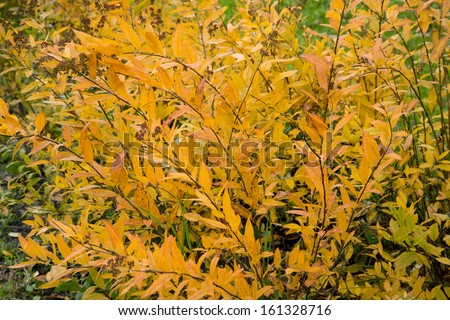 bright yellow autumn leaves  - stock photo
