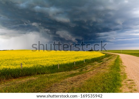 Bright Yellow Canola Field and a Spring Thunderstorm - stock photo