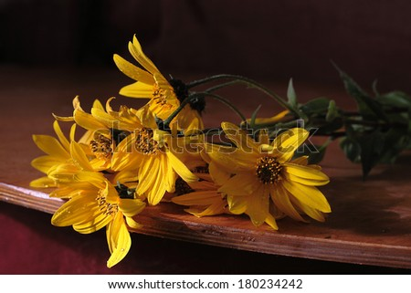 Bright yellow large beautiful camomiles