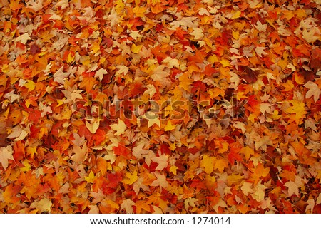 Brightly Colored Autumn Leaves - stock photo