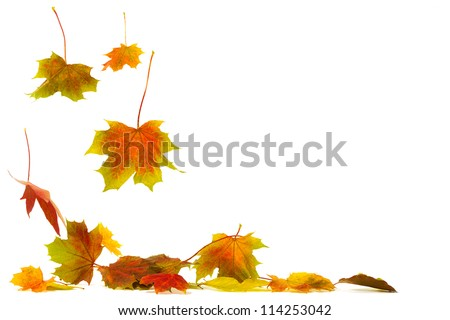 Brightly colored falling leaves isolated on white background with shadows on the ground - stock photo