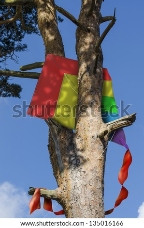 Brightly colored kite stuck in a tall tree - stock photo