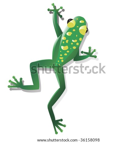 Brightly colored poison tropical frog isolated against a white background. Frog has bright yellow spots on its green skin.