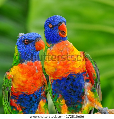 Brightly colored rainbow lorikeet - stock photo