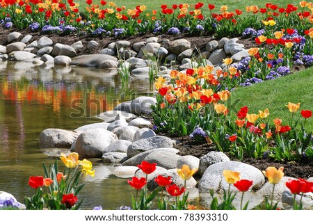 Brightly colored red and yellow tulips with rocks bordering a pond and green lawn. Tulips reflecting in water. - stock photo