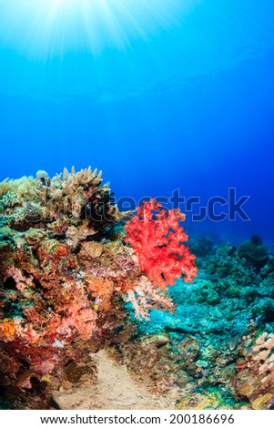 Brightly colored soft corals and sunbeams on a tropical reef - stock photo