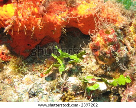 Brilliant colored reef environment - stock photo