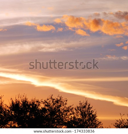 Brilliant colors in a sunset or sunrise sky over silhouetted tree tops  - stock photo