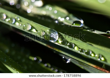 Brilliant drops of dew or rain on the grass on a blurred background