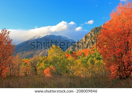 Brilliant fall colors in the Wasatch Mountains, Utah, USA. - stock photo