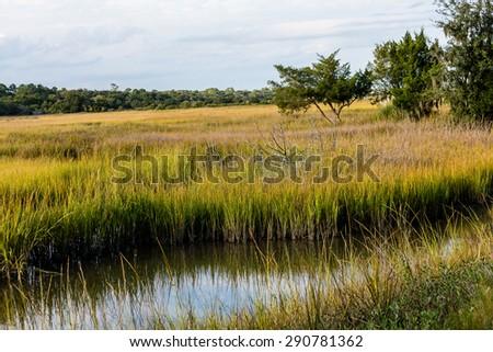 Brilliant Green Wetland Marsh Grass Growing Under Blue October Skies - stock photo