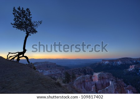 Bristle-cone Pine Sunrise at Bryce National Park, USA