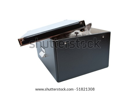 british cat hiding in black box isolated - stock photo
