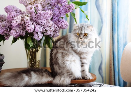 British cat sits near a bouquet of lilacs
