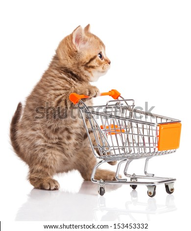british cat with shopping cart isolated on white. kitten osolated - stock photo