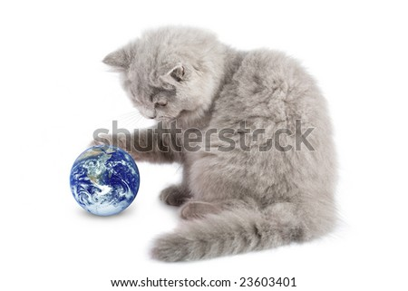 british kitten playing with earth planet isolated - stock photo