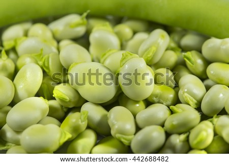 Broad beans in a bowl closeup - stock photo