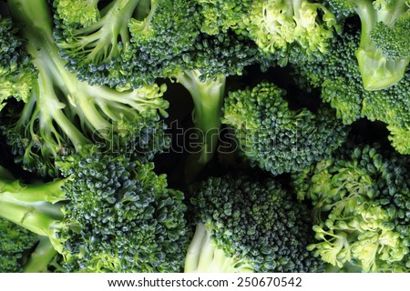 broccoli background - stock photo