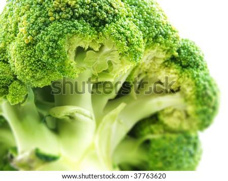 broccoli om white background - stock photo