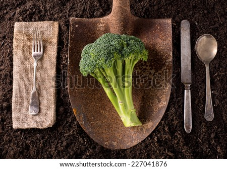 Broccoli organic farm to table healthy eating concept on soil background.