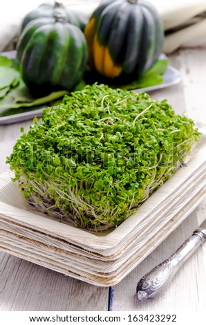 Broccoli sprouts in bamboo plate - stock photo