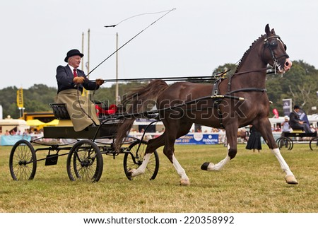 BROCKENHURST, UK - JULY 31: A superbly handled Hackney carriage is displayed for the judges to mark & comment on during the Hackney competition at the New Forest show on July 31, 2014 in Brockenhurst  - stock photo
