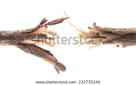 Broken Branches on white background. - stock photo