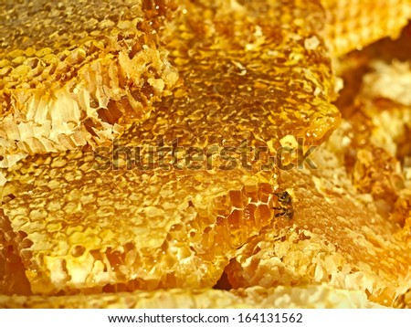 Broken honeycomb with honey, a bee on the honeycomb cells surface - stock photo
