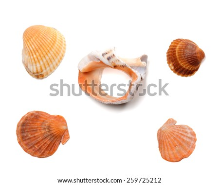 Broken rapana and seashells isolated on white background. Top view. - stock photo