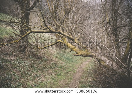 Broken tree near a path in the forest