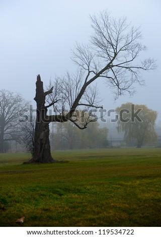 Broken tree on a misty morning - stock photo