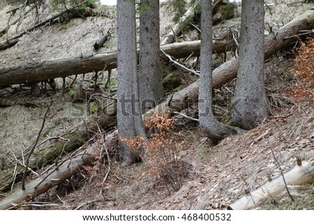 broken trees laying in forest