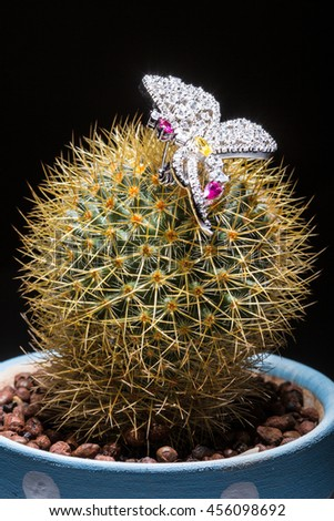 Brooches and beautiful fresh green cactus, love concept - stock photo