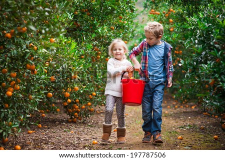 Brother and sister carrying a bucket full of mandarins on a mandarin farm after picking fruit - stock photo