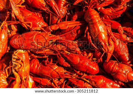 Crawfish stock images royalty free images vectors for Fishing with crawfish