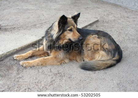 brown and black shepherd dog lying on grey sand